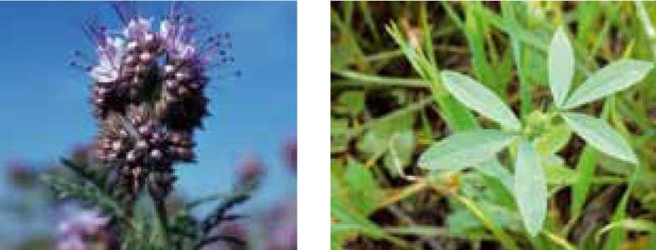 TerraLife-Biomax - Zwischenfruchtmischung für Gülleverwertung