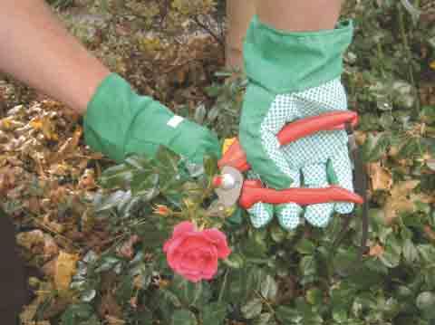 Handschuhe für den Garten