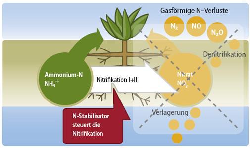 Gesteuerte Umwandlung von Ammoniumstickstoff in Nitratstickstoff mit ALZON 46