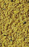 Versele-Laga Eifutter für Kanarien und Waldvögel
